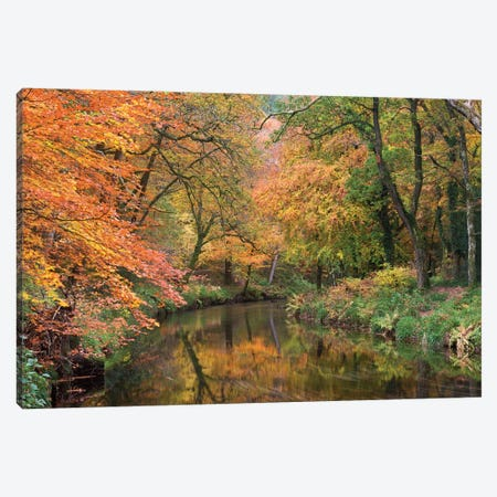 Teign Golds Canvas Print #ABU42} by Adam Burton Art Print