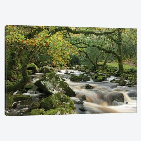 The Dewerstone Wood Canvas Print #ABU44} by Adam Burton Canvas Wall Art