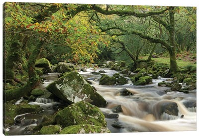 The Dewerstone Wood Canvas Art Print