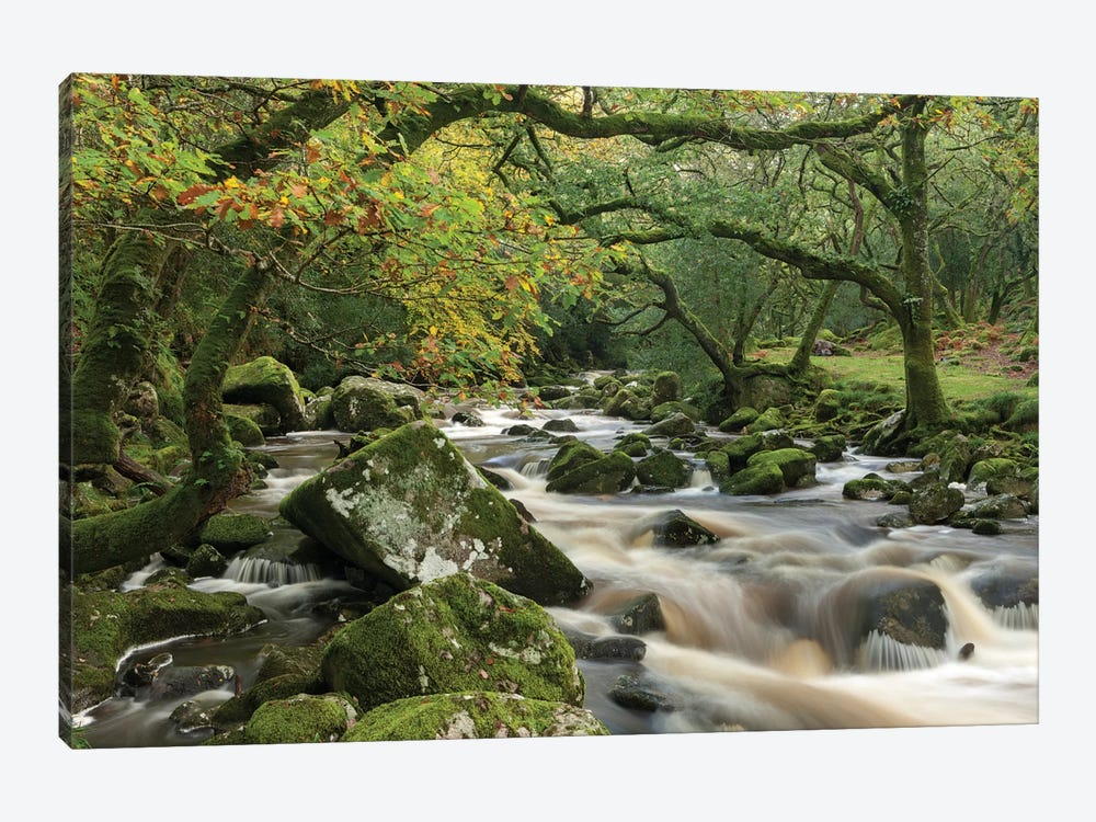 The Dewerstone Wood by Adam Burton 1-piece Art Print