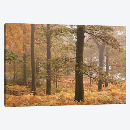 Ullswater Woodland Canvas Print #ABU59} by Adam Burton Canvas Wall Art