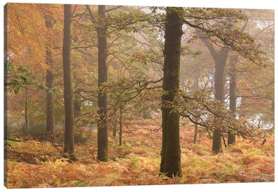 Ullswater Woodland Canvas Art Print