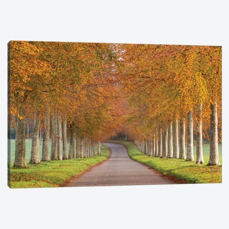 Autumn Splendour Canvas Print #ABU5} by Adam Burton Art Print