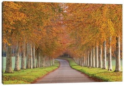 Autumn Splendour Canvas Print #ABU5