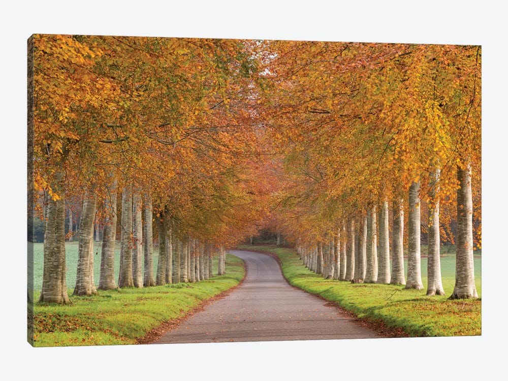 Autumn Splendour by Adam Burton 1-piece Canvas Wall Art