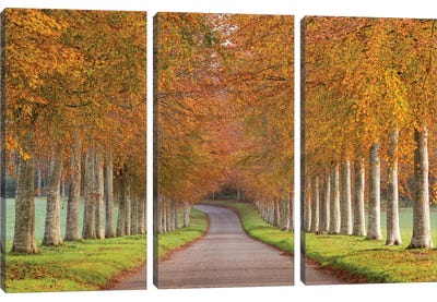 Autumn Splendour Canvas Art Print