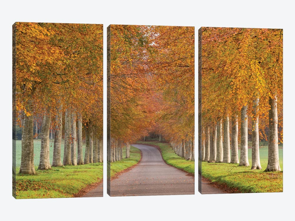 Autumn Splendour by Adam Burton 3-piece Canvas Art