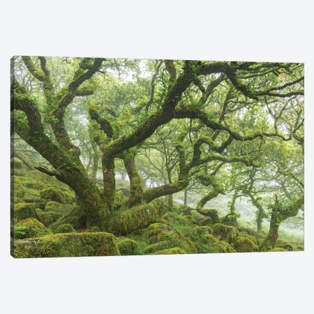 Ancient Woodland Canvas Print #ABU63} by Adam Burton Canvas Print
