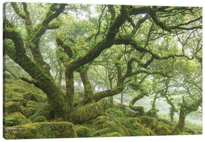 Ancient Woodland Canvas Art Print