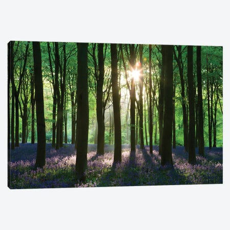 Bluebell Woodland Canvas Print #ABU67} by Adam Burton Canvas Art