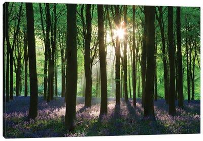 Bluebell Woodland Canvas Art Print