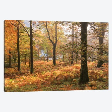 Colours Of Autumn Canvas Print #ABU68} by Adam Burton Canvas Print