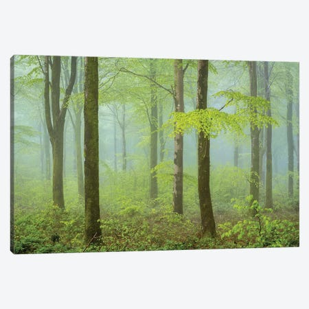 Colours Of Spring Canvas Print #ABU70} by Adam Burton Canvas Artwork