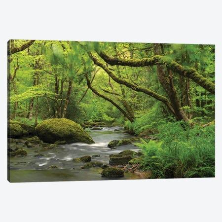 Fairytale Forest Canvas Print #ABU75} by Adam Burton Art Print