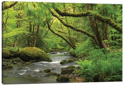 Fairytale Forest Canvas Art Print