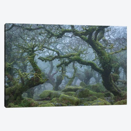 Fangorn Forest Canvas Print #ABU76} by Adam Burton Art Print