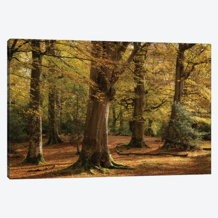 Forest Golds Canvas Print #ABU77} by Adam Burton Art Print