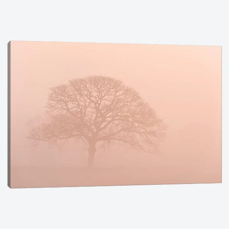 Oak Tree In Morning Mist Canvas Print #ABU90} by Adam Burton Canvas Wall Art