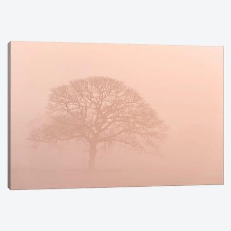 Oak Tree In Morning Mist Canvas Print #ABU90} by Adam Burton Canvas Wall Art