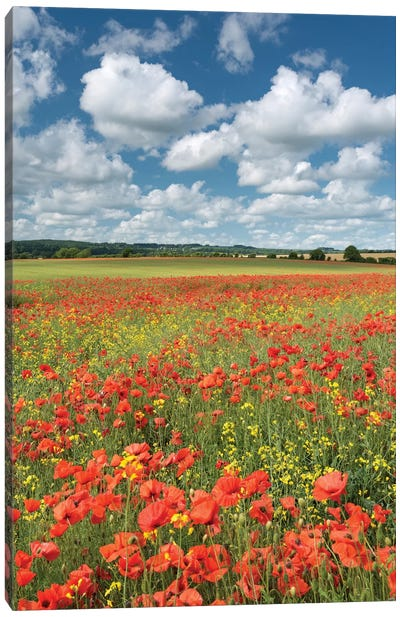 Colours of Summer (Dorset) Canvas Art Print