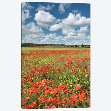 Colours of Summer (Dorset) Canvas Print #ABU9} by Adam Burton Canvas Wall Art