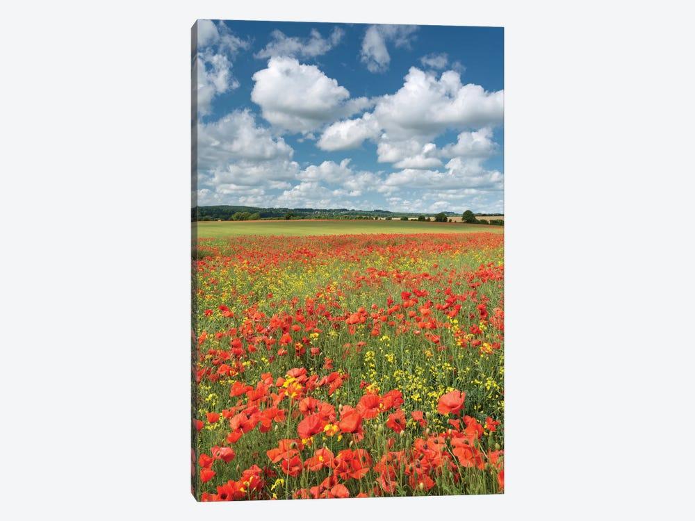 Colours of Summer (Dorset) by Adam Burton 1-piece Canvas Wall Art