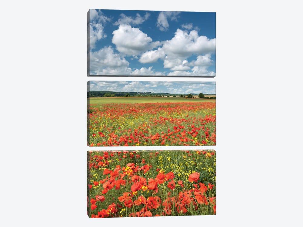 Colours of Summer (Dorset) by Adam Burton 3-piece Canvas Artwork