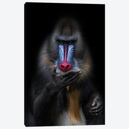 The Fortune Teller Canvas Print #ACA13} by Alessandro Catta Art Print
