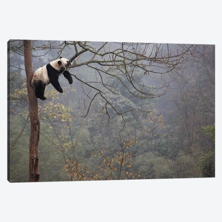 Lazy Panda Canvas Print #ACA1} by Alessandro Catta Canvas Artwork