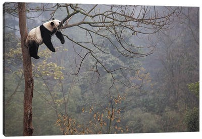 Lazy Panda Canvas Art Print
