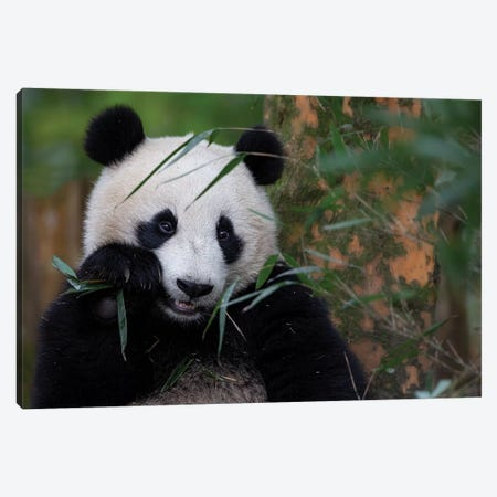 Bamboo Time Canvas Print #ACA2} by Alessandro Catta Canvas Art