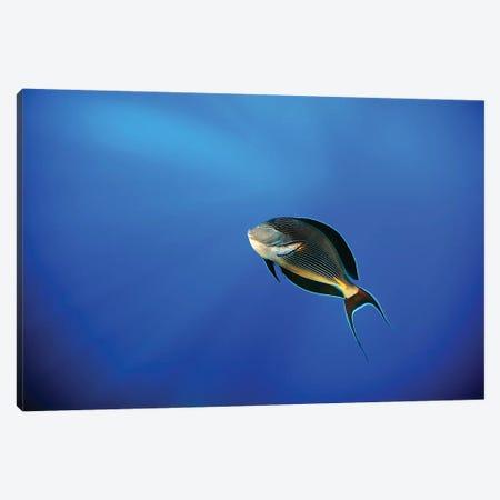 Blu Canvas Print #ACA3} by Alessandro Catta Canvas Art
