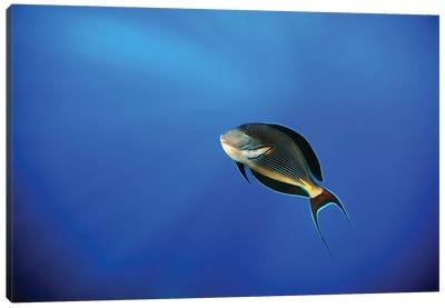 Blu Canvas Art Print