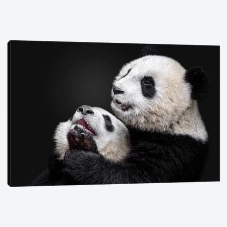 Pandas Canvas Print #ACA8} by Alessandro Catta Canvas Wall Art