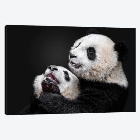 Pandas Canvas Print #ACA8} by Alessandro Catta Canvas Wall Art