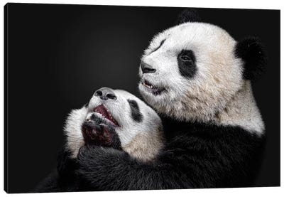 Pandas Canvas Art Print