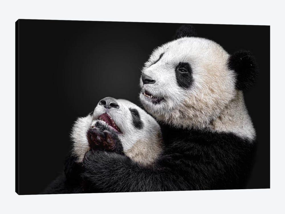 Pandas by Alessandro Catta 1-piece Canvas Wall Art