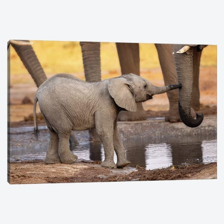 Play With Me, Please! Canvas Print #ACA9} by Alessandro Catta Canvas Art