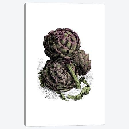 Artichoke Canvas Print #ACE55} by Alchera Design Posters Canvas Artwork