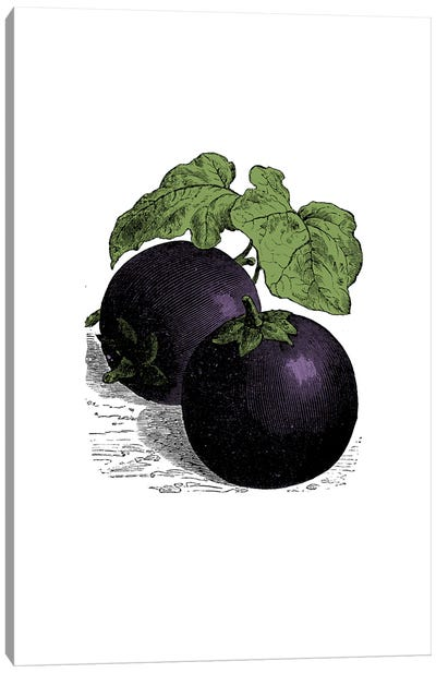 Aubergine Canvas Art Print