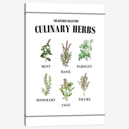 Culinary Herbs Canvas Print #ACE91} by Alchera Design Posters Canvas Art Print
