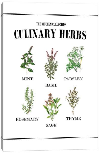 Culinary Herbs Canvas Art Print