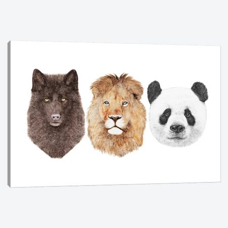 Lion Wolf And Panda Canvas Print #ACR31} by Animal Crew Canvas Wall Art
