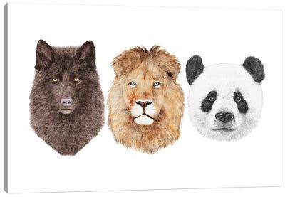 Lion Wolf And Panda Canvas Art Print