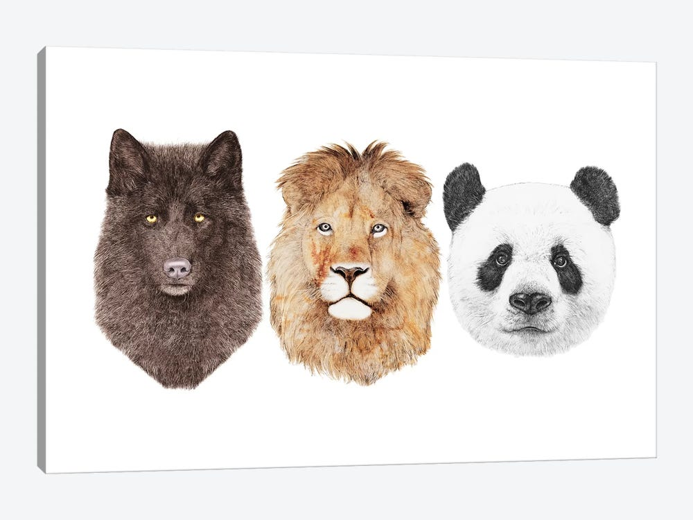 Lion Wolf And Panda by Animal Crew 1-piece Canvas Wall Art