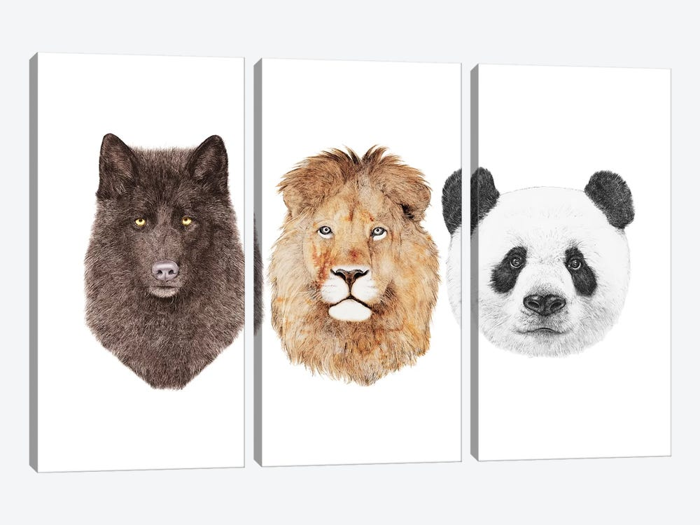 Lion Wolf And Panda by Animal Crew 3-piece Canvas Art