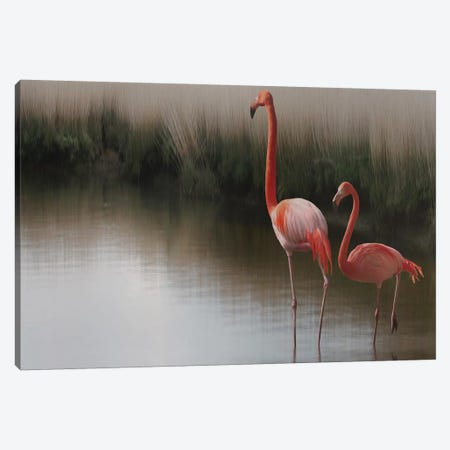Flamingos Canvas Print #ACS4} by Anna Cseresnjes Canvas Art