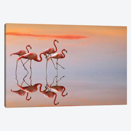 Flamingos Family 3-Piece Canvas #ACS8} by Anna Cseresnjes Canvas Print