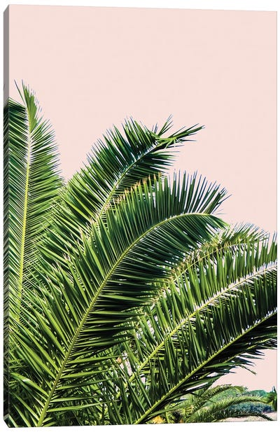 Tropical Leaves on Blush I Canvas Art Print