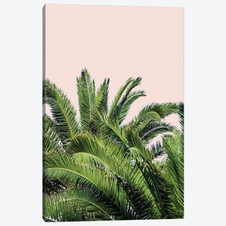 Tropical Leaves on Blush II Canvas Print #ACT11} by Acosta Canvas Artwork